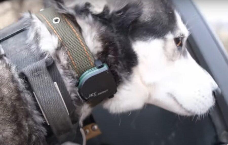 Трекер для собакJet Pet Doggy